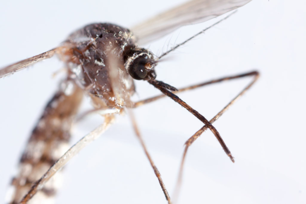 mosquito control in South Kingstown